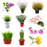 Colección con diversas flores y las plantas, aisladas en blanco Foto de archivo