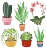 Colección con las flores planas en potes ilustración del vector