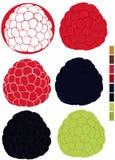 Colección con las frambuesas y las zarzamoras con la paleta de colores usados Fotos de archivo libres de regalías