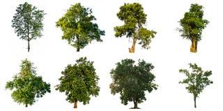 Colección de árbol aislado en el fondo blanco imagen de archivo
