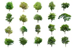 Colección de árboles aislados en el fondo blanco Fotos de archivo