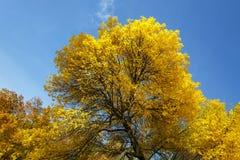 Colección de árboles coloridos hermosos del otoño - verdes, amarillo, la naranja se va Fotos de archivo
