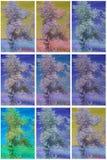 Colección de árboles infrarrojos Foto de archivo libre de regalías