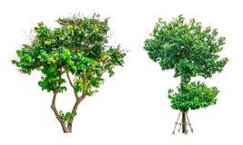 Colección de árboles verdes aislados en el fondo blanco Fotos de archivo