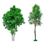 Colección de árboles verdes aislados en el fondo blanco Fotografía de archivo
