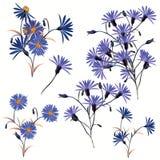 Colección de altas flores azules realistas del campo de vector libre illustration