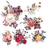 Colección de altas flores detalladas del vector en el estilo realista FO Imagen de archivo libre de regalías