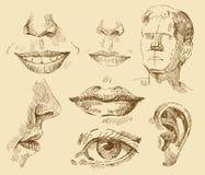 Colección de arte ilustración del vector