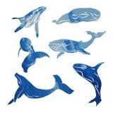 Colección de ballenas azules libre illustration