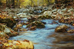 Colección de bosque del otoño Imágenes de archivo libres de regalías