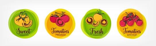Colección de brillante coloreada alrededor de las etiquetas para los tomates, la salsa de tomate y los productos superiores relac stock de ilustración
