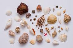 Colección de cáscara del mar Foto de archivo
