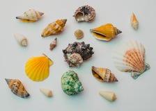 Colección de cáscaras del mar en un fondo blanco Foto de archivo libre de regalías