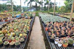 Colección de cactus y de cuarto de niños suculento del invernadero del jardín para la planta cariñosa y de desierto seca imágenes de archivo libres de regalías