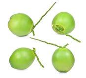 Colección de cocos verdes frescos en el fondo blanco Foto de archivo libre de regalías