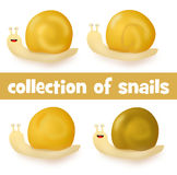 Colección de cuatro caracoles lindos de la historieta Foto de archivo libre de regalías