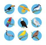 Colección de diseño plano de los diversos pájaros libre illustration