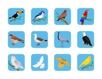 Colección de diseño plano de los diversos pájaros ilustración del vector