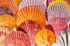 Colección de diversas conchas marinas coloridas en fondo negro Fotos de archivo