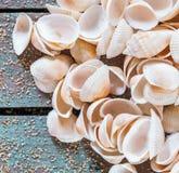 Colección de diversas conchas marinas en la madera rústica Fotos de archivo