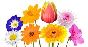 Colección de diversas flores coloridas aisladas en blanco Fotografía de archivo