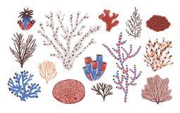 Colección de diversos corales y alga marina o algas aislados en el fondo blanco Especie subacuática hermosa, mar profundo stock de ilustración