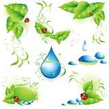 Colección de elementos verdes del diseño. libre illustration