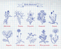 Colección de especias y de hierbas dibujadas mano Fotos de archivo