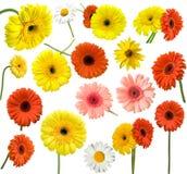 Colección de flor de la margarita Imagen de archivo libre de regalías