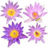 Colección de flor de loto hermosa aislada Fotos de archivo libres de regalías