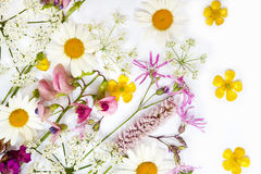 Colección de flores Imagen de archivo