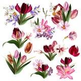 Colección de flores en colores pastel realistas Imágenes de archivo libres de regalías