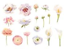 Colección de flores pintadas a mano de la acuarela stock de ilustración