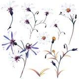 Colección de flores realistas del vector para el diseño ilustración del vector