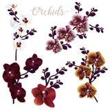 Colección de flores realistas de la orquídea del vector, ejemplo tropical libre illustration