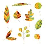 Colección de follaje decorativo ilustración del vector