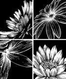 Colección de fondos con las flores. Imagen de archivo