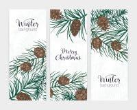 Colección de fondos festivos verticales elegantes del invierno con las ramas de árbol conífero del bosque y conos y día de fiesta libre illustration