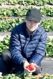 Colección de fresas tempranas Adolescente en una tenencia de la chaqueta Imagen de archivo