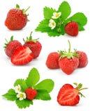 Colección de frutas rojas de la fresa aisladas Imagen de archivo libre de regalías