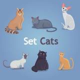 Colección de gatos de diversas razas Fije los gatos Imágenes de archivo libres de regalías