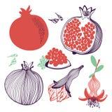 Colección de granadas Fruta, hoja, flor y pedazo Ejemplo exhausto de la mano del vector en el estilo plano de moda moderno para l libre illustration