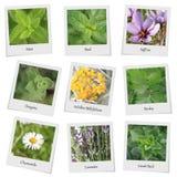 Colección de hierbas y de especias Imágenes de archivo libres de regalías