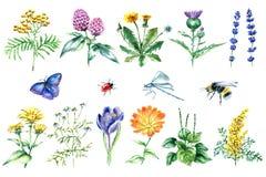Colección de hierbas y de plantas médicas dibujadas mano Foto de archivo