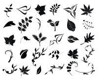Colección de hojas Fotografía de archivo libre de regalías