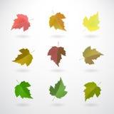 Colección de hojas de la pasa Fotografía de archivo libre de regalías