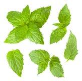 Colección de hojas de menta aisladas en el fondo blanco Imagen de archivo libre de regalías