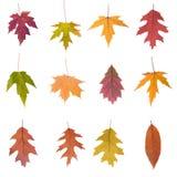 Colección de hojas de otoño Imagen de archivo