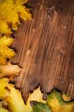 Colección de hojas de otoño Fotografía de archivo