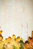 Colección de hojas de otoño Fotografía de archivo libre de regalías